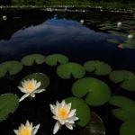 「美しい信州を撮ろう!写真家と巡る信州撮影ツアー」8月の撮影スケジュールプラン