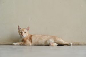 Phuket (56)_R